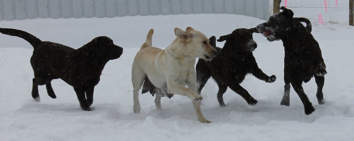 Dogs playing in the snow Feb.25